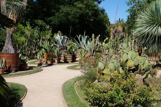 jardin de cactus photo de parc de la t te d or lyon tripadvisor. Black Bedroom Furniture Sets. Home Design Ideas