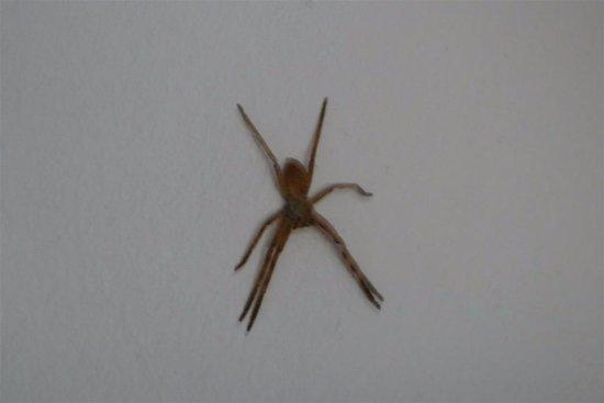 Rorke's Drift, Afrique du Sud : Large Spider on bedroom wall