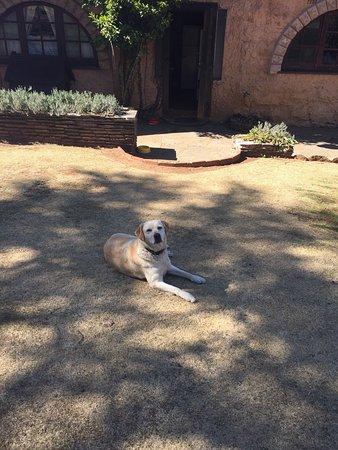 Magaliesburg, Sudafrica: La Provence D'Afrique