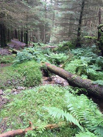 Braithwaite, UK: Whinlatter Forest Park