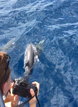 Trois-Ilets, Martinik: Les dauphins se montrent