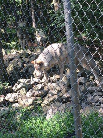 Columbia, Нью-Джерси: Lakota Wolf Preserve