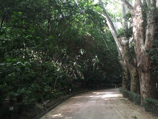 La concepcion jardin botanico historico de malaga la for Conception jardin