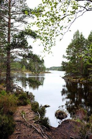 Aviemore, UK: View on the Loch an Eileen circular walk