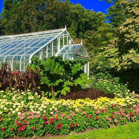 Volunteer Park Conservatory: Blooming.