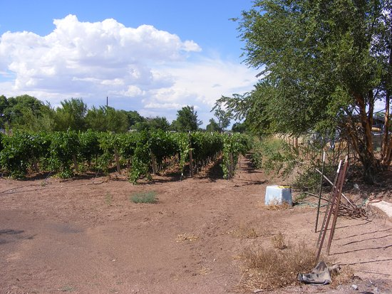 Los Lunas, New Mexiko: Vines in the Back