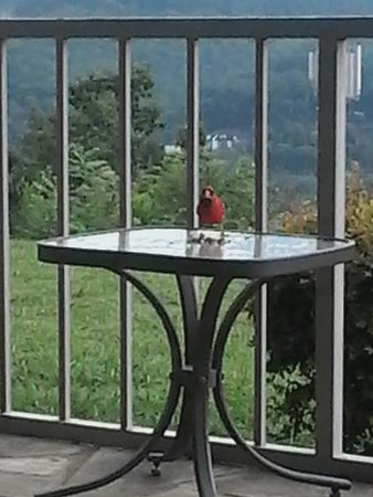 The Highlands Condominium: Our daily visitor