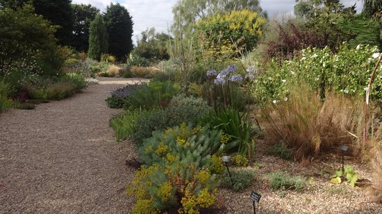 The Beth Chatto Gardens: Dry Garden Late August