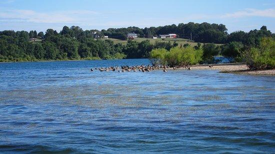 Hanover, PA: Geese