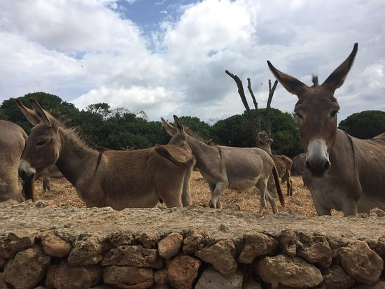Podere di Monte Sixeri: The farm's donkeys