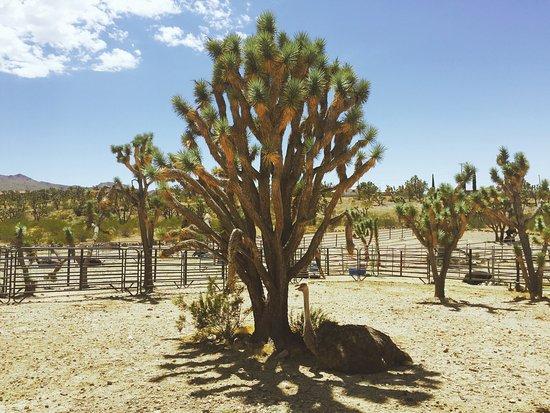 Dolan Springs, AZ: photo0.jpg