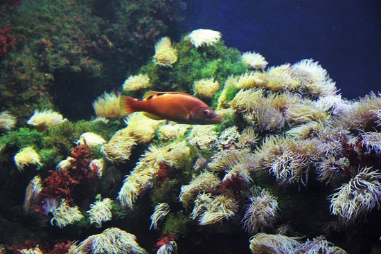 Poissons color s picture of aquarium donostia san for Poisson exotique aquarium