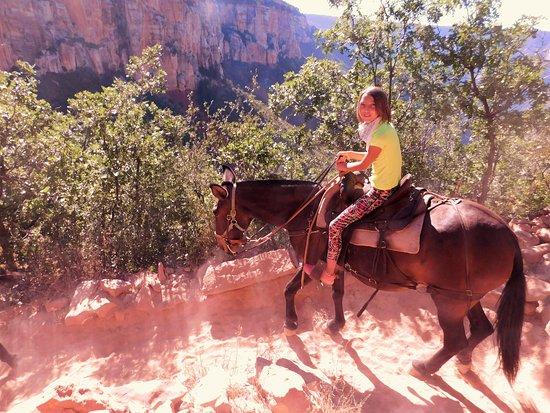 Grand Canyon North Rim Mule Rides Tour Tropic June