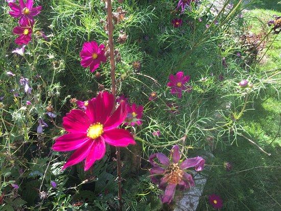 Tisbury, UK: Pythouse Kitchen Garden