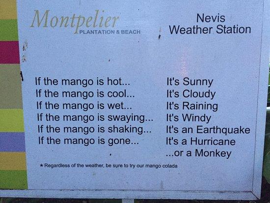 نيفيس: Island Humour