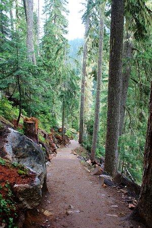 Pemberton, Canada: Looking down trail (way steeper than it looks!!)