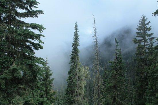 Pemberton, Canada: Morning fog on trailhead