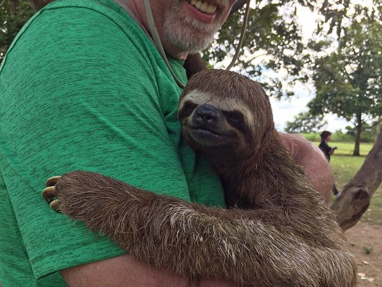 The Monkey Island : so cute...the sloth, that is ;)