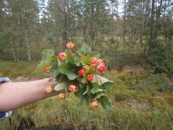 ยูสดาล, สวีเดน: Nationalparken i hjortrontid...