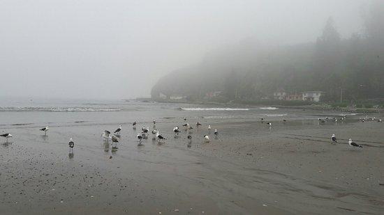 Puchuncavi, Cile: Caminata con Carla