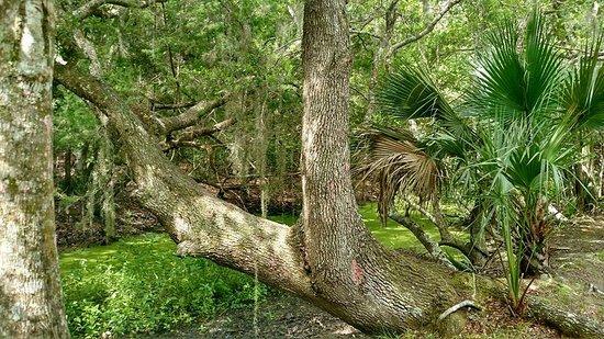 Fernandina Beach, FL: Willow pond trail