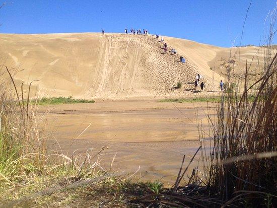 Paihia, New Zealand: Sand Dunes & Sand Boarding