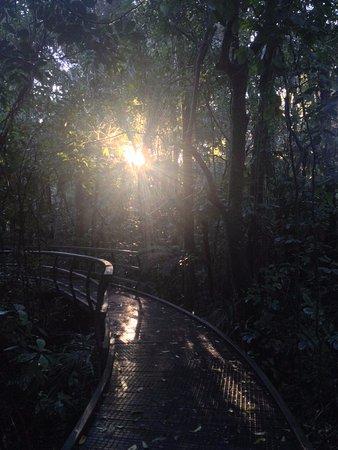 Paihia, New Zealand: Kauri Forest Walk