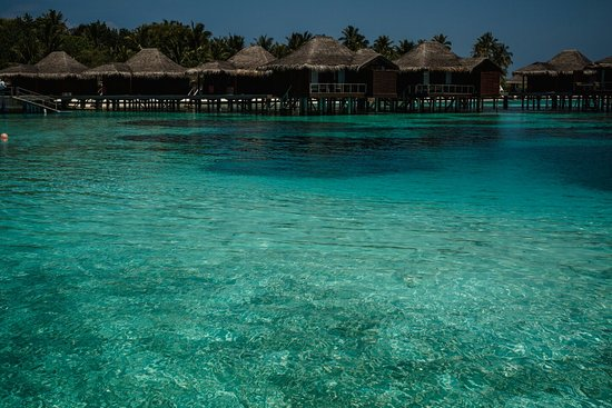 Anantara VeliMaldivesResort: Maldivas - Yanna + Tarcisio -159_large.jpg