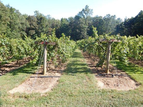 Skippers Creek Vineyard