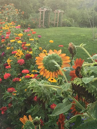 Mount Horeb, WI: Beautiful flowers planted everywhere
