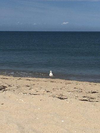 Joseph Sylvia State Beach: photo3.jpg