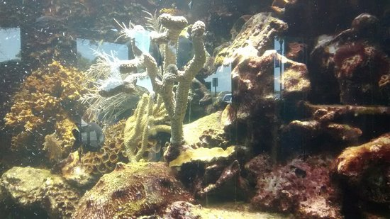 St. Lucie County Aquarium - Smithsonian Marine Ecosystems Exhibit 사진
