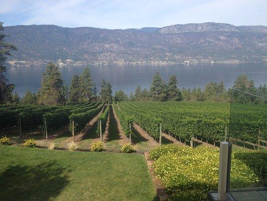 MJO Tours: Vineyards at Arrowleaf.