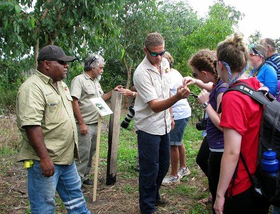 Ingham, Australia: Bush medicine lesson