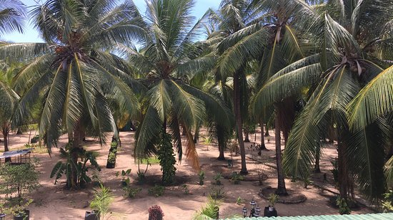 Nandawanam Guesthouse : View of palms from upstairs balcony of family room.
