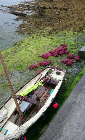 New Quay, Irlanda: Snapchat-5943215016182019502_large.jpg