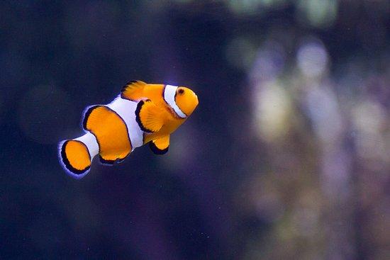 Poisson clown aquarium de la rochelle aquarium la - Poisson shark aquarium ...