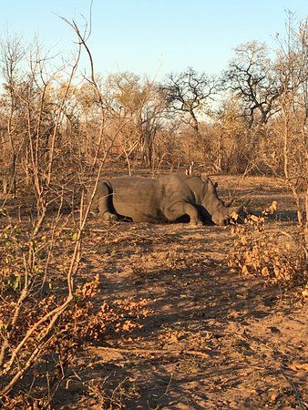 Simbambili Game Lodge: photo3.jpg