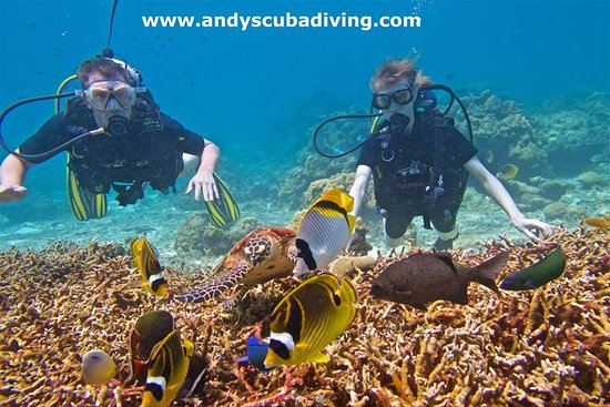 Andys Scuba Diving Phuket : Andy's dive destinations are teeming with fish- even in the off season!