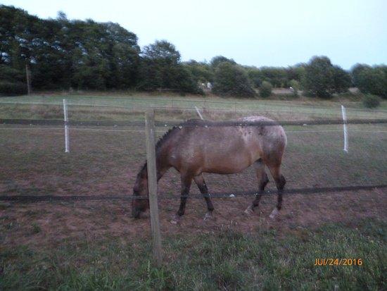 La Rolandie Haute: magnifique cheval dans le champs
