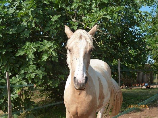 La Rolandie Haute: magnifique cheval, vue de la chambre