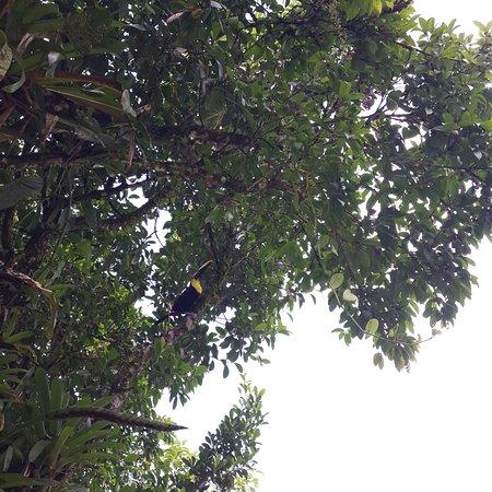Sarapiqui, Costa Rica: Toucan