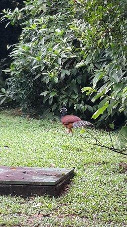 Sarapiqui, Costa Rica: big big bird