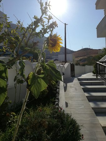 Sideris Sunflower Villa: IMG_20160803_174048_large.jpg