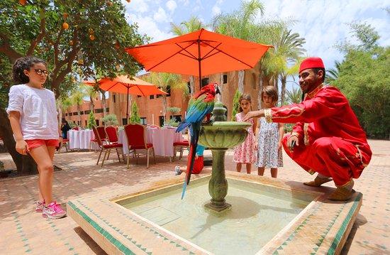 Oulad Teima, Marocko: Ambiance Terrasse
