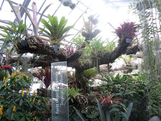 Orchid es photo de jardin botanique de montreal for Jardin botanique montreal papillons 2016
