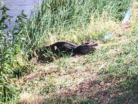 Mount Irvine, Τομπάγκο: Water hazard at Plantations GC!
