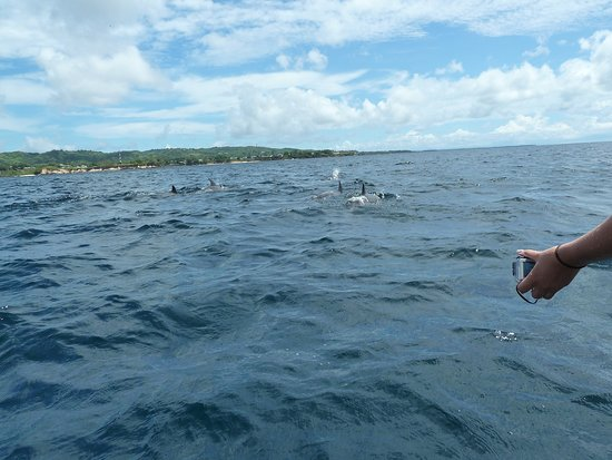 Mount Irvine, Tobago: Dolphins off Turtle Beach