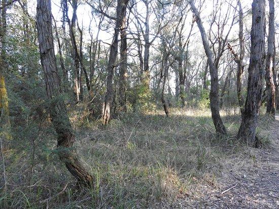 Ollerton Avenue Bushland Reserve