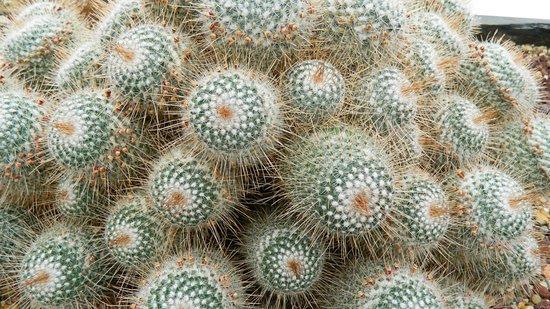 Volunteer Park Conservatory: Beautiful cactus
